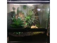 Live Planted Glass Exo Terra 45x45x45