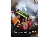 Full hamster set up