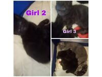 Beautiful fluffy kittens ready for forever homes 21st May