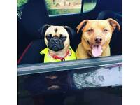 Dog walker/Sitter in Beeston area