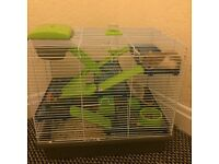 Two male fancy rats 10weeks old! Sad sale of Charlie and Timmy.