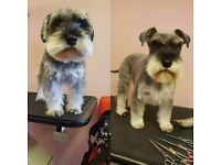 Hair of the Dog - Mobile Dog Grooming, Walking and Sitting Service
