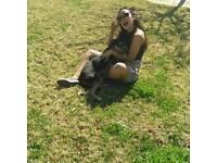 Doggie lover !!!!!!!