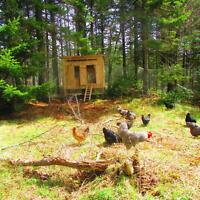 Easy Keeper Hen Houses