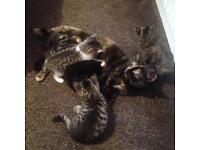 Beautiful Kittens 😻