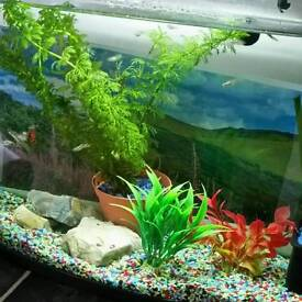 ENDLER Guppies Tropical Fish 7 fish mix of male and female