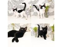 2 beautiful kittens ready now
