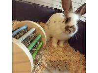 Friendly female rabbit for re-homing