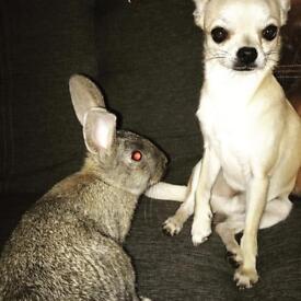 Rabbit!!! FREE TO GOOD HOME!