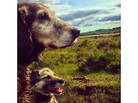 Dog walking and pet care in Dibden and the new forest area