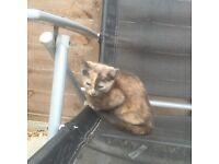 Playful kitten needs new home