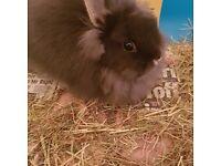 Small fluffy cute rabbit + Cage