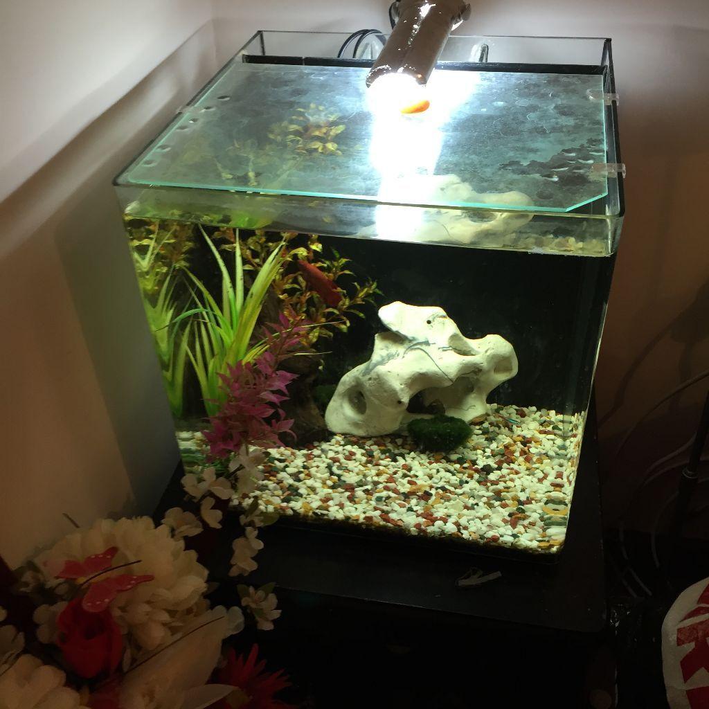 Superfish aquarium fish tank aqua 40 - Aqua One Nano 40 Fish Tank Aquarium