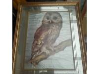 Owl mirror picture