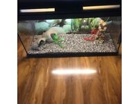Glass fish/reptile tank