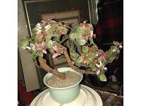 Vintage jade glass bonzai tree
