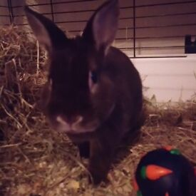 Rabbit and cage etc for sale