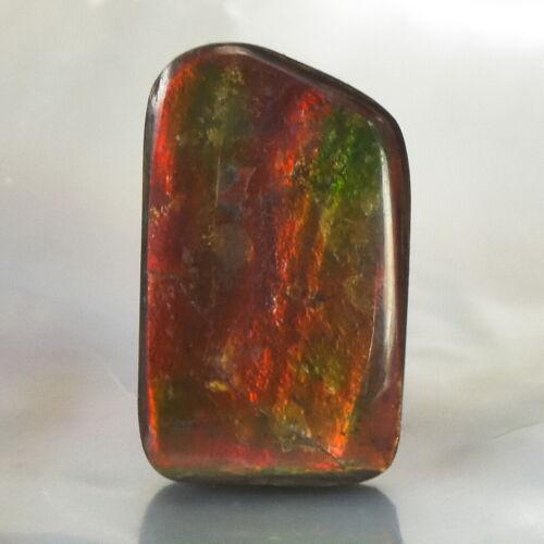 Ammolite Ammonite 3.44 g Rare Gemstone Cabochon Canada 21.78 x 13.12 x 4.77 mm