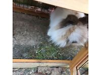 Rabbit & large rabbit hutch with run & 10kg food for rabbit