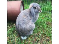 Very Special Home needed for Gorgeous Rabbits
