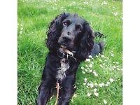 DOG WALKING SERVICE - BRIDGE OF DON, BALMEDIE, ELLON - £8 for one hour walk!