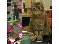 Missing cat female