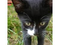 Kittens for sale 1 boy 1 girl