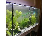 Fish tank 100l Glossy white stand