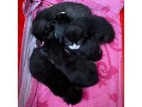5 Gorgeous Kittens