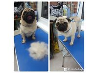 🐕🐾Peppa's paws amd susie's claws dog grooming services!🐕🐾