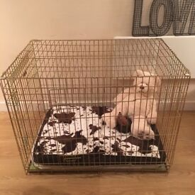 "Elli Bo 42"" XXL Gold Dog Crate and Divider"