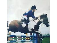 Freelance rider/groom and equine holiday care