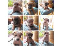 Puppies for sale!