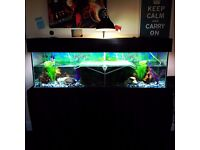 Musk turtles and set-up