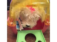 Dog in carrier case