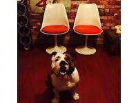 Eero Saarinen Parker Knoll Tulip Chairs (2)