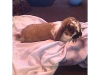 Very Healthy Vaccinated and Friendly Rabbits For Sale