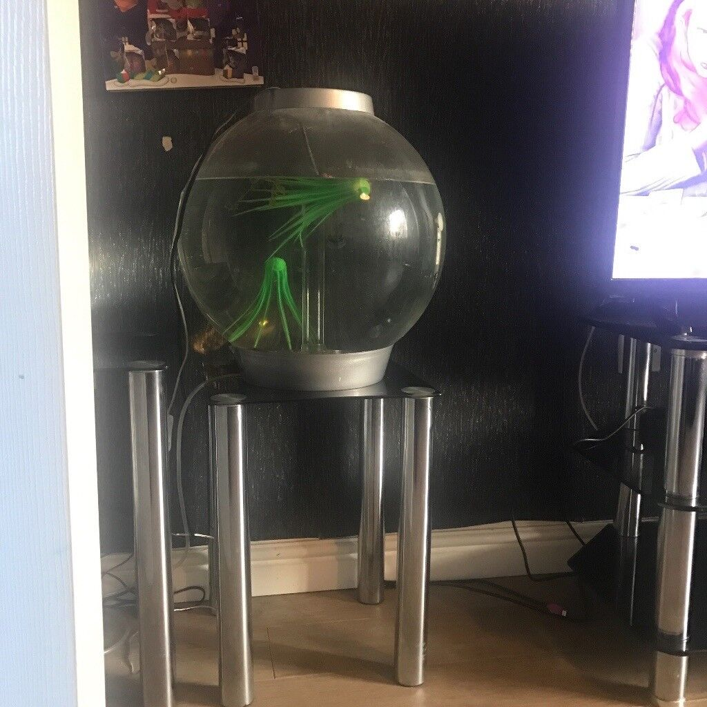 Biorb 30L tropical fish tank and 3x Tetras