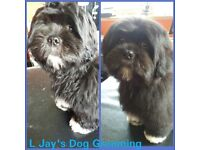 L Jay's Dog Grooming free local pick up and drop off