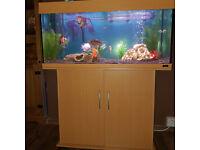 Juwel 180 L tropical aquarium