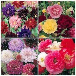 vintage Double flowered cottage garden collection 4 packets 1660 flower  seeds