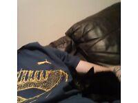 Black male kitten 10 weeks