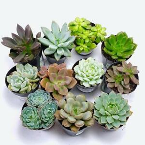 Wedding decorations kijiji in winnipeg buy sell save with succulents cactuses terrariums and supplies junglespirit Image collections