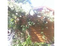 Good Solid 8ft x 6ft Shed