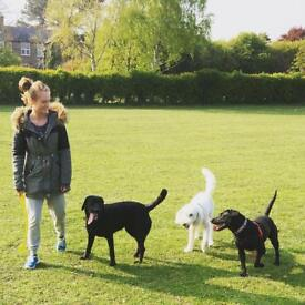 Local Dog walking service in Thanet, Kent.