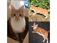MISSING CAT IN RENFREWSHIRE
