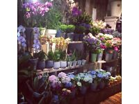 Experienced Florist in central London. Titania's Garden