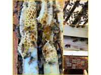 Real Organic Raw Honey crystallized set honey