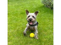 Dog walker/Puppy visit