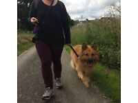 Penny's Pack Dog Walking: reliable, loving dog walkers available in Worcestershire
